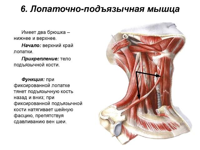 Как расслабить мышцы шеи причины симптомы лечение проблемы