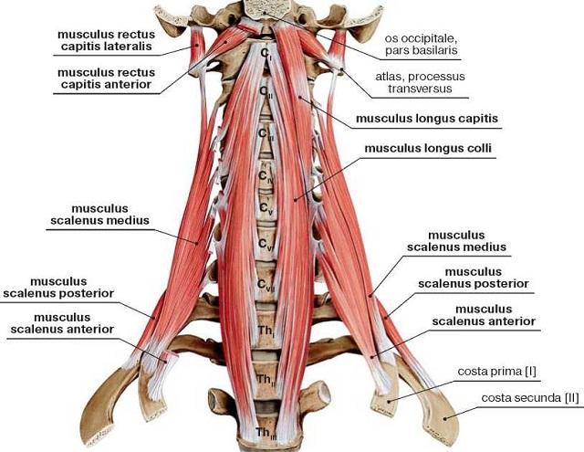 болят в голове мышцы и суставы