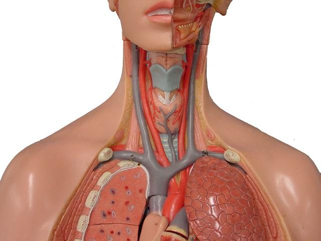 Нестенозирующий атеросклероз внечерепных брахиоцефальных артерий