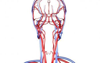 Csuklyásizom fájdalom okoz görcsöt tünetek, mit kell tenni és hogyan enyhíti a fájdalmat