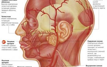Uzi ganglionilor limfatici ai gâtului, care arată transcrierea normală RMN și CT
